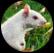 squirrelhead.jpg